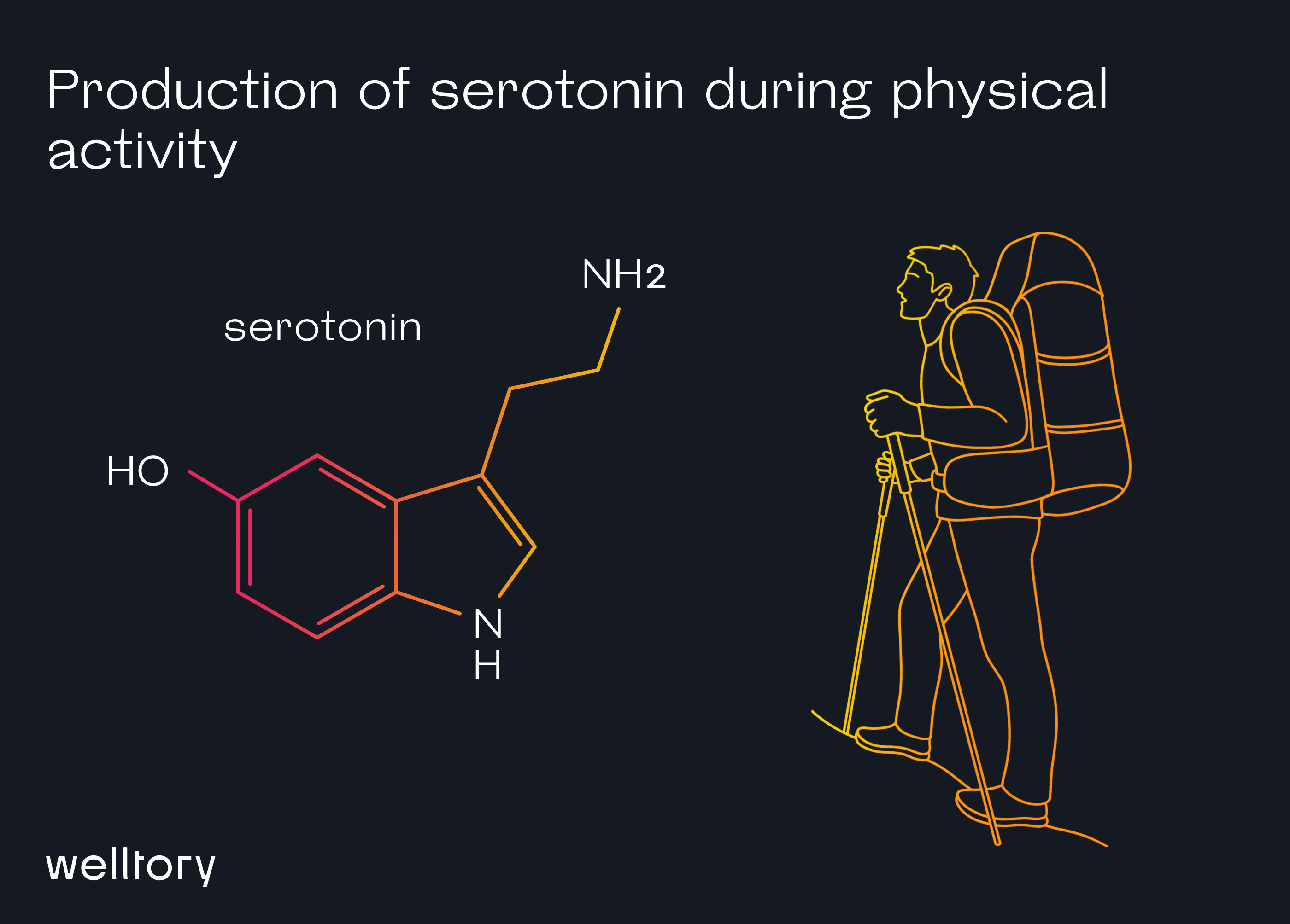 Production of serotonin during physical activity